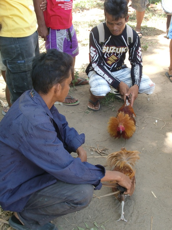 Cockfighting: A Pinoy Obsession - Fish Sauce